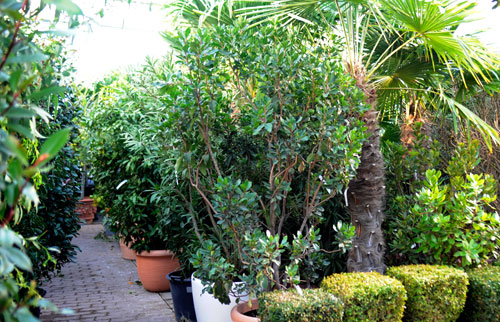 verschiedene Pflanzen