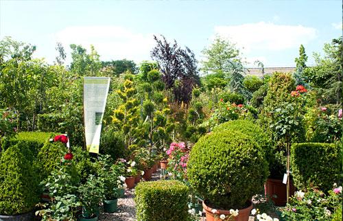 verschiedene Pflanzen im Außenbereich