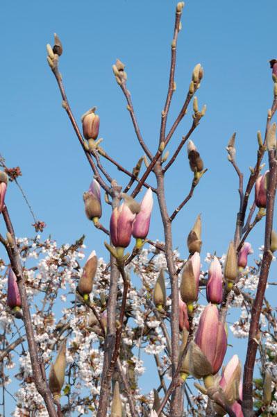 Zweige im Frühling